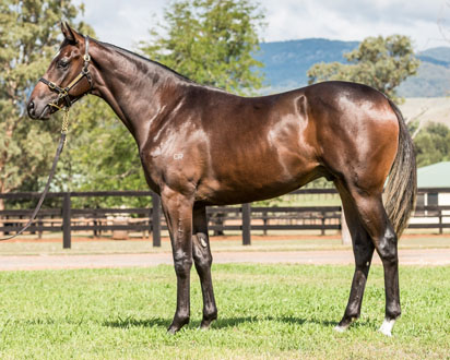Lot 165 Grand Prospect-Medaglia d'Oro 15