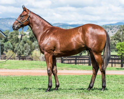 Lot 320 Royal Glow-Snitzel 15