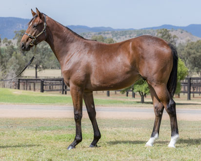 Lot 442 Willow Creek 16