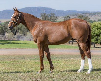 Lot 450 Wobbly Boot 16