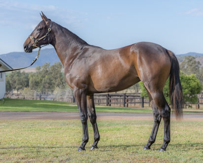 Lot 782 Grand Strategy 16
