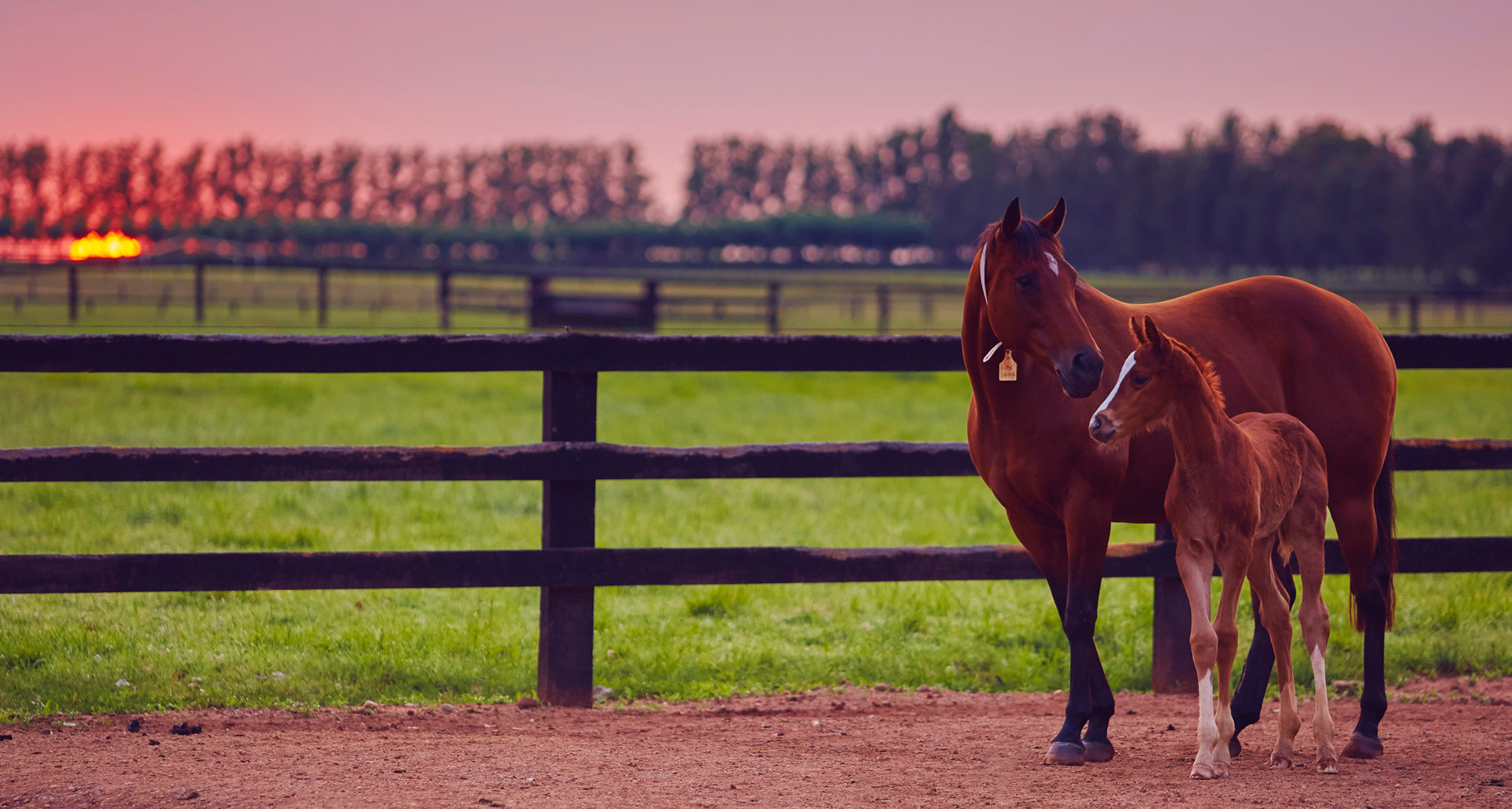 EXPERT THOROUGHBRED KNOWLEDGE